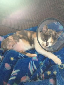Wonks the Cat is resting after her surgery. Find out why some questions are crazier than others for this north shore vet hospitals