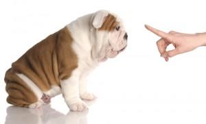 puppy training wahroonga veterinary clinic