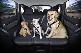 Check out these safe but happy pups
