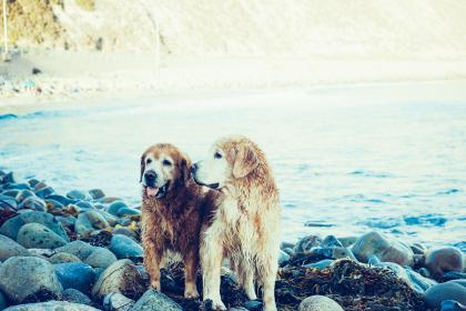 Two elderly dogs enjoying some time together