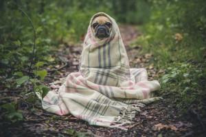 Winter pet healthcare specials from Fox Valley Animal Hospital