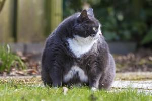 pet weight loss