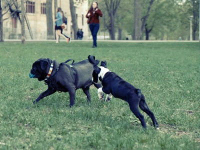 Park manners are very important in avoiding pet fights. Photo by Julien Sister