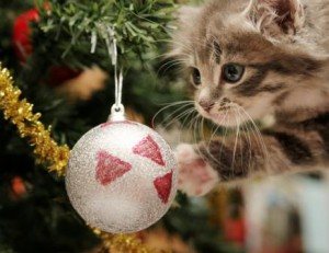 vet hospitals talk about the dangers your pets can face this Christmas
