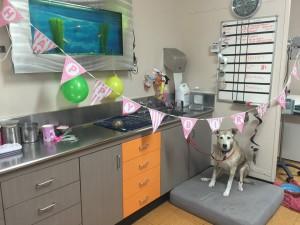 pet at vet clinic -heather fox valley animal hospital
