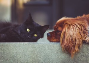 new pet care with fox valley animal hospital wahroonga