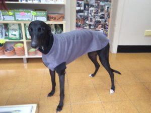 fox valley vet hospital rescue greyhound