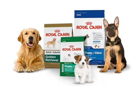 pet nutrition - royal canin for dogs