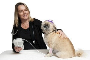 Vet checking dog's heartrate