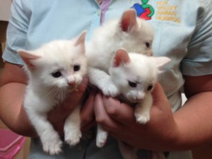 Past adoption kittens of Fox Valley Animal Hospital - a cat vet in Sydney
