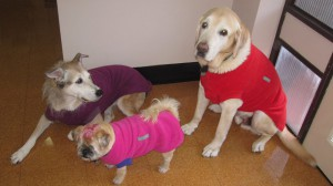 "Part of our four pawed customer service team - Heather"" in Mushroom, ""Max"" in Red and ""Audrey"" in Fuchsia"