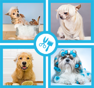 pooch parlour dog groomer wahroonga