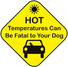 veterinary health information on heat stroke and dogs by Fox Valley Animal Hospital of Wahroonga