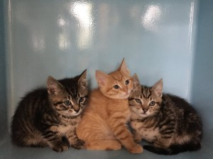 kitten and cat rehoming
