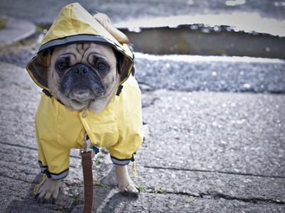 sydney vets bad weather