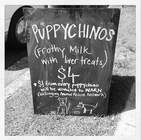 Dog Friendly Areas Sydney