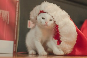 animal hospital holiday tips