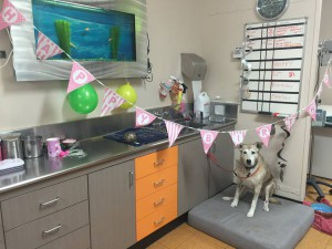 pet at vet clinic -heather fox valley animal hospital