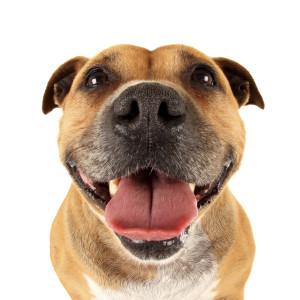 https://foxvalleyanimalhospital.com.au/dog-daycare/