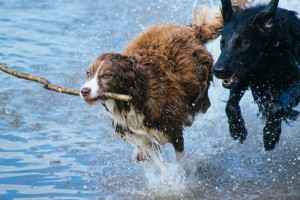 dog socialisation wahroonga - fox valley animal hospital