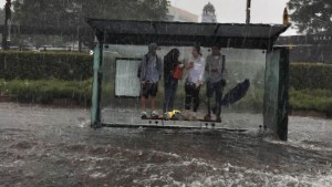 pet disaster plan in flooding sydney