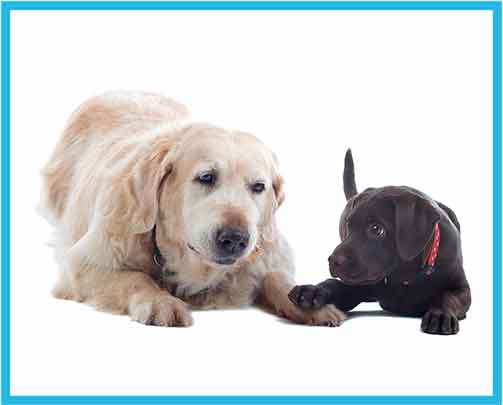 Doggy Daycare at Fox Valley Animal Hospital