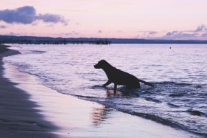 wahroonga vet hospital - summer time pet tips