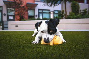pet health mental stimulation