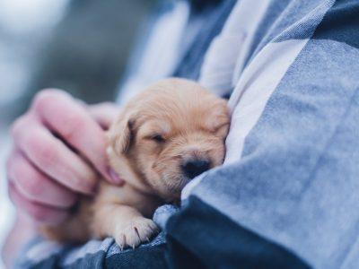 puppy with sydney vet