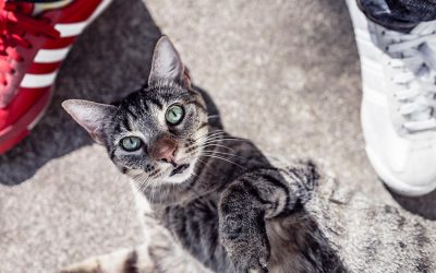 cat looking up - cat behavioural issues