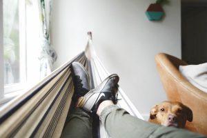 positive dog socialisation begins with a strong bond