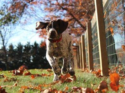 make your pet run for the pet food you choose by choosing right