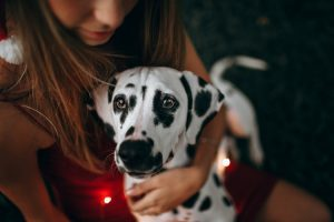 demonstrating common pets with disabilities such as the dalmatian with deafness