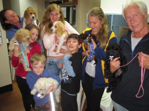 Photo of the recent puppy preschool graduates at Fox Valley Animal Hospital in Wahroonga.